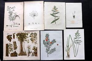 Botanical Prints 19th Century Mixed Lot of 12 Antique Prints. Book Plates