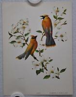 Cedar Waxwing Rudolf Freund Birds Lithograph Art Print 6 x 8