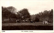 Ealing. The Common # S 6263 by WHS Kingsway. Donkeys.