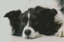 "Border Collie Puppy Dog 31cm x 20.5cm(12"" x 8"") D2409"