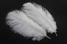 beautiful 10 pcs White 15-20 cm/6-8 inch ostrich feathers carfts decorative