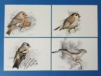Set of 4 Vintage Art Postcards Portugal Birds of the Region by Jose Projecto CZ0