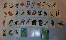 vintage Animal Bird fish Card Game 1959 Edu-Cards with box made in USA