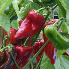 Dulce de Espana roter Paprika aus Spanien Pimento Gemüsepaprika