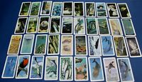 VINTAGE BROOKE BOND CAN COLLECTOR RED ROSE TEA CARDS-EXPLORING THE OCEAN #2
