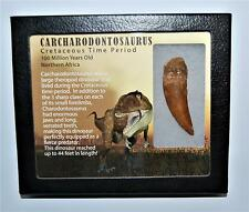 "CARCHARODONTOSAURUS Dinosaur Tooth 2.352"" Fossil African T-Rex LDB #12846 15o"