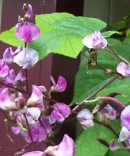 Dolichos biflorus pea vine 25 seeds