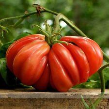 50 Samen-Tomate Zapotec - Heirloom Sorte gerippt aus Mexiko -!
