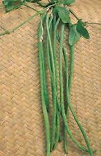 Kings Seeds - Vegetable - Climbing French Bean Yard Long - 40 Seeds