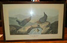 "Antique Framed John Audubon American Water Ouzel Print 14.25"" x 22"" (1837) V.G."