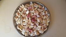Garlic Seeds  30 cloves  MIXED hard and soft neck Garlic Corms cloves