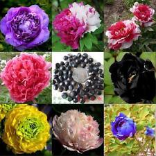 Mixed Tree Peony PAEONIA SUFFRUTICOSA FLOWERS seeds (5 seeds) X-041