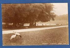 Cranes Woburn Park RP pc used 1914 W496