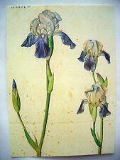 *ALBRECHT D�œRER*Postkarte*Blumen*Zeichnungen*4er Set/ Einzeln*10 x 15*