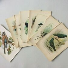 Vintage/Antique bookplates of British Birds