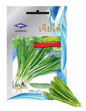10 PACKET OF PARSLEY 28000 SEED Thai Vegetable Plant