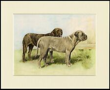 MASTIFF TWO DOGS GREAT DOG PRINT MOUNTED READY TO FRAME