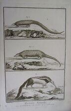 GRAVURE ORIGINALE SUR CUIVRE DE MARTINET 1768 FOURMILIER  LE PANGOLIN PHATAGIN
