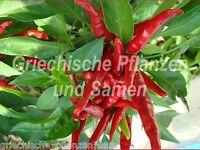 🔥 🌶️ THAI DRAGON  Chili  10 frische Samen scharf + Massenernte Paprika