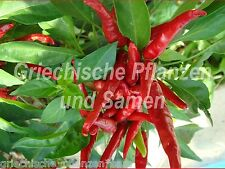 THAI DRAGON  Chili  10 frische Samen scharf + Massenernte Paprika