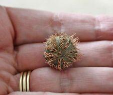 "~ Sea Urchin Spines ~ Purple ~ 1,000 ~ 1//4/""~ Shellcraft ~ Sailor/'s Valentines ~"
