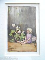 CICELY MARY BARKER - The Wood Sorrel Fairy Flower Fairies, Vintage Mounted Print