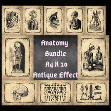 More details for medical human anatomy wall art macabre print x 10 bundle a4 antique effect dark
