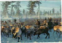 Finnland - Cpsm - Renar I Lappland - The Land Of Reindeers