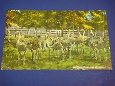Ostrich Farm Hot Springs Arkansas Vintage Colorful Postcard PC6