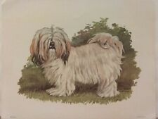 Havanese Dog Breed Lithograph Art Print by Ole Larsen 1950's