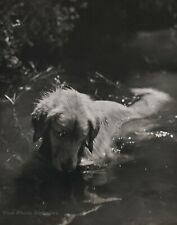 1990 Vintage BRUCE WEBER Golden Retriever Dog Adirondack River Photo Art 12X16