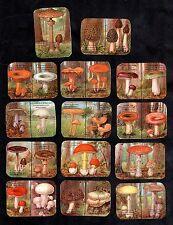 Mushrooms & Toadstools Belgian Chicory Cards Mid 1900's Fungi Cep