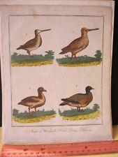 Vintage Print,SNIPE,Dublin,1792,Plate 37