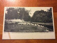 Postcard Dekalb, Illinois. Pastures Green on the Kishwaukee. Undivided Unposted