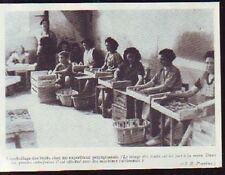 1949  - PERPIGNAN  EMBALLAGE DES FRUITS A LA MAIN  P352