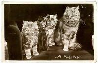 Antique RPPC postcard photograph portrait of 3 cats kittens A Family Party