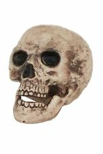 Life Sized Skull Halloween Horror Prop with Movealbe Up and Down Lower Jaw