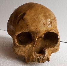 REPRODUCTION FOSSILE crane Femme Cro Magnon 2 Les Eyzies Sapiens Skull cast
