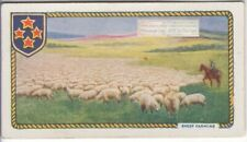 Sheep Ranching In Australia New Zealand British Commonwealth c90 Y/O Trade Card