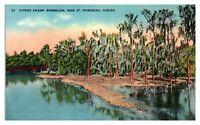 Cypress Swamp, Dunnellon near St. Petersburg, FL Postcard *5N(3)13