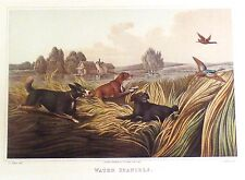 Alken's Sporting Print- WATER SPANIELS - Antique Hand-Colored Aquatint - 1820