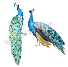 Transparent self-adhesive sticker from painted wall, Peacock, birds, bird 101