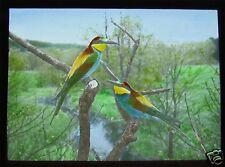 Glass Magic Lantern Slide EUROPEAN BIRDS NO15 BEE EATER ORNITHOLOGY PHOTO