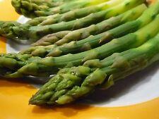 25 graines - ASPERGE d'Argenteuil hâtive - Asparagus officinalis