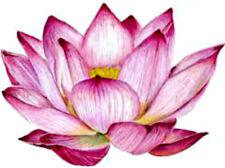 20  water slide  Diy Manicure Nail decals Pink  lotus flower  Trending