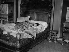 Lot 2 photos originales Juliette Gréco panthère lit Maléfices