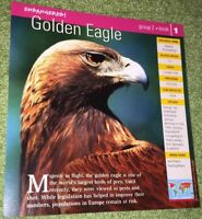 Endangered Species Animal Card - Birds - Golden Eagle