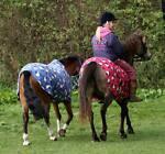 Dreamchaser Equestrian