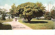 Early 1900's The China Tree in Aiken, SC South Carolina PC