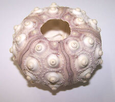 Sputnik Sea Urchin Shells - Craft Work, Embellishments, Displays etc.